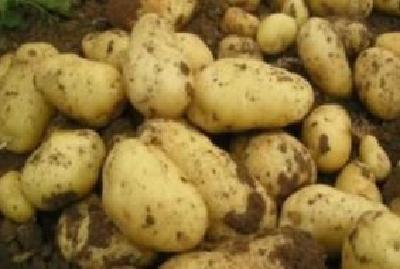 """恩施武汉一家亲,工会""""娘家人""""将10万斤土豆送至武汉疫情防控一线"""
