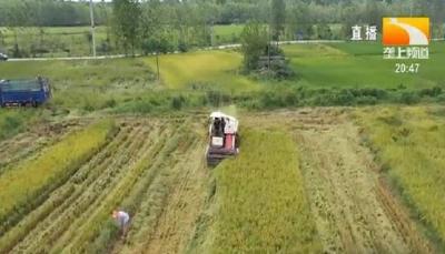 水稻需肥规律和关键施肥技术