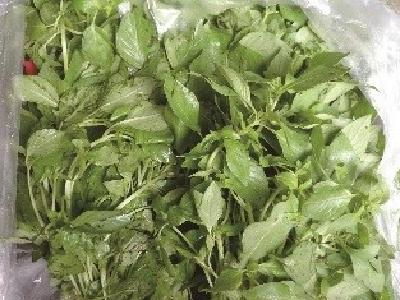 荆芥进入武汉菜场,一斤十几元钱的叶子菜你会吃吗?