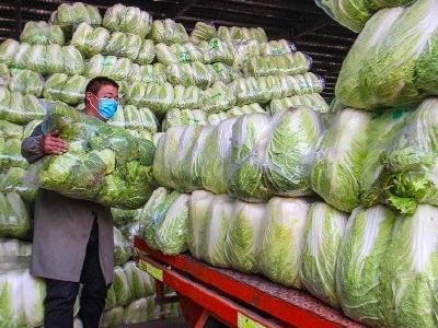 """武汉""""菜篮子""""供应充足 日均采收7400吨"""
