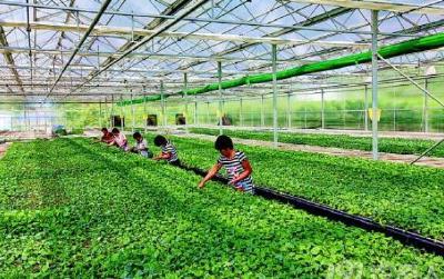 分级保鲜 年入千万  潜江赵刚打造供港蔬菜产业园