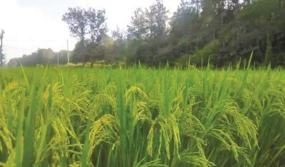 宜昌:如何抓好粮食安全和重要农产品稳产保供?