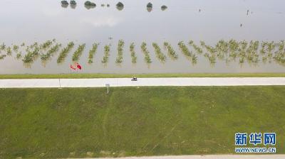 未来3天汉江中下游将高水位运行