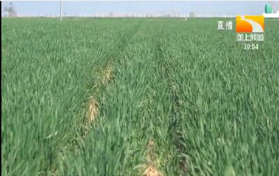小麦灌浆期做好六点
