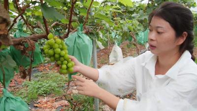 90后襄阳女孩打造百亩采摘园 带领村民增收致富