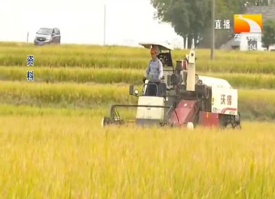 今年秋粮丰收基础好 种植面积稳中有增,预计超12.9亿亩