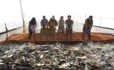 鲜鱼起水市价落 降幅最大的已打五折