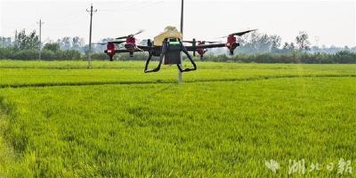 湖北早稻总产增加6200万斤 受农业农村部通报表扬