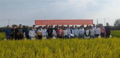 湖北春季176份抽检水稻种子纯度全部达标