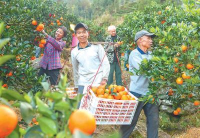 引种赣橙开富路——嘉鱼渡普镇渔民上岸兴业记