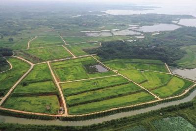 光谷300余亩太空稻下月丰收