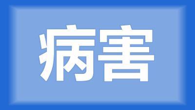 枝江市卢师傅:鱼塘消毒杀虫后还是有烂腮的鱼,哪里有问题?