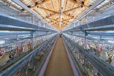 天门改造治理560家畜禽规模养殖场